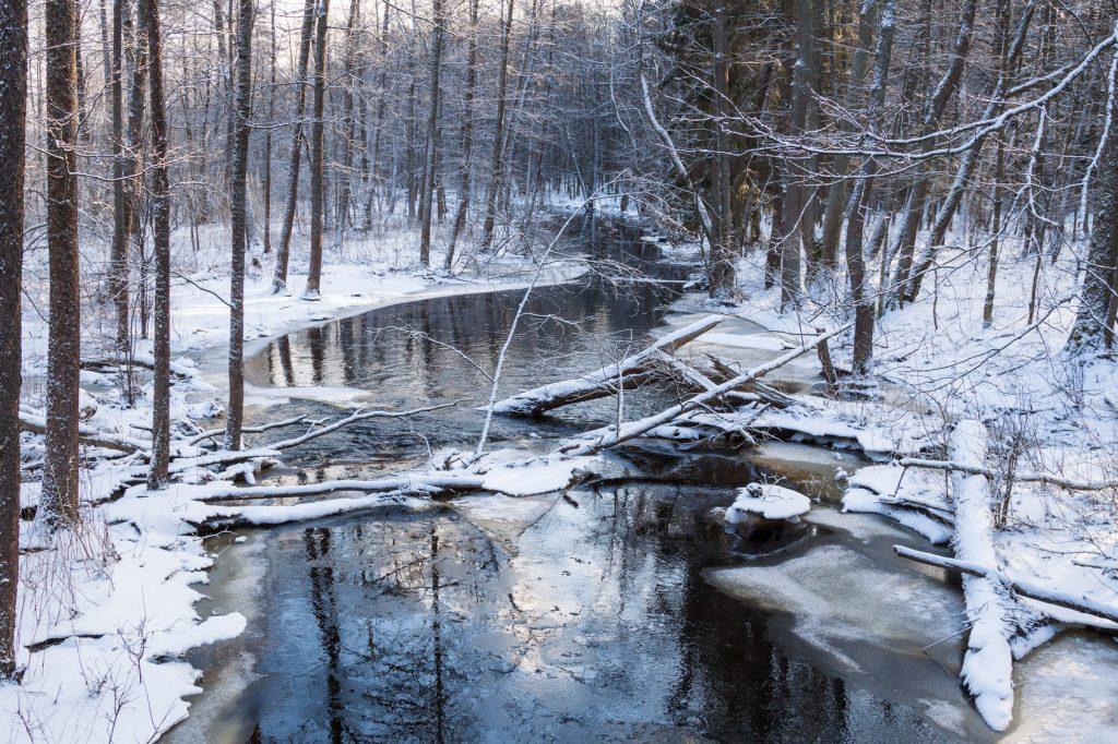 Zimowe safari w Białowieży